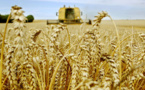 Céréales : Le gouvernement américain table sur 3183,8 millions de tonnes