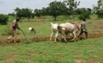 Agriculture : Le projet d'appui aux politiques agricoles valide le manuel de suivi-évaluation