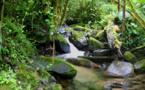 Environnement : Un tourisme durable peut protéger la biodiversité et contribuer à atteindre les ODD