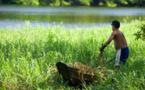 Tropiques: Une zone en première ligne face aux défis du changement climatique et du développement durable