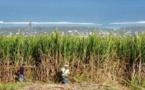 Fabrication de sucre: Progression de l'activité, en variation trimestrielle