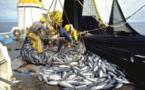 Pêche : Baisse des débarquements au troisième trimestre 2017