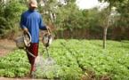 Agriculture : Macky Sall magnifie les performances de la production horticole