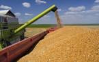 Blé tendre français : L'offre mondiale devrait se situer à 1011,4 Millions de tonnes
