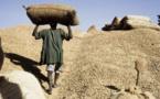 Papa Abdoulaye Seck, ministre de l'Agriculture : « A l'heure actuelle, plus de 506 mille tonnes d'arachide ont été collectées »