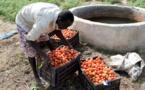 Bassin arachidier : Un projet financé par l'Ue compte créer 6 mille emplois