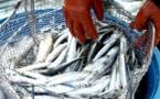 La valorisation des produits de pêche et de l'agriculture, un des maillons essentiels du PSE, selon Mamadou Ndione, DG du COSEC