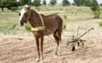 Sénégal : Une étude relève une baisse des superficies cultivées en arachide et en mil