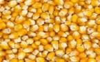 Production de maïs: Hausse de 0,2% de la campagne 2017-2018