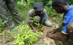 SENEGAL : La politique de reboisement et de gestion durable et inclusif des formations végétales doit être au centre des plans d'urbanisme