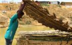 Des sols sains sont essentiels pour réaliser l'objectif Faim Zéro et parvenir à la paix et à la prospérité (FAO)