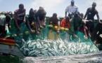 Secteur halieutique: Bonne tenue des débarquements de la pêche, en variation trimestrielle