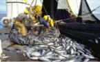 SENEGAL : Le CONIPAS veut contribuer à l'amélioration de la gouvernance du secteur des pêches, selon son secrétaire général