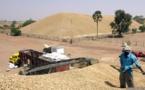Commercialisation de l'arachide : Macky Sall  veut la fixation du prix au kilogramme