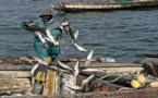 LENTEURS DANS LE RENOUVELLEMENT DES LICENCES AVEC LA MAURITANIE : Près de 8 000 pêcheurs de Saint-Louis au chômage