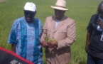 Autosuffisance en riz : Macky Sall annonce une nouvelle date, 2020