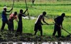 Résilience aux changements climatiques : Le Sénégal et le Fida s'associent pour l'agriculture et l'entreprenariat  rural