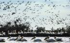Santé animale : Mise en place d'un réseau d'épidémio surveillance de la faune