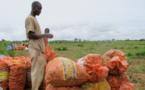 Energie,  chaines de valeurs agricoles et industrielles : Les grands axes de la stratégie de la Bad en Guinée