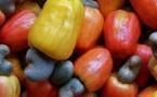 Anacarde : L'ASEPEX à Ziguinchor pour accompagner les filières à l'exportation