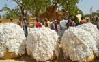 Café, coton graine, arachide :  Des productions en hausse dans l'espace Uemoa