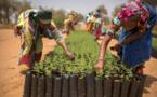 Afrique : face au changement climatique, il faut renforcer la résilience pour améliorer la sécurité alimentaire (FAO)