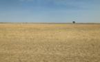 Restaurer les terres contribuerait à sauver la planète et à dynamiser l'économie (ONU)
