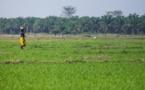 Avec une meilleure gouvernance foncière, l'Afrique peut cesser de dépenser 35 milliards de dollars par an en importations de produits alimentaires