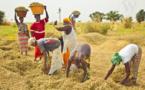 Agriculture : La valeur ajoutée estimée à plus de 1000 milliards en 2018