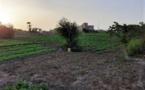 La pandémie du COVID-19 : une légitimation de la promotion de l'agriculture urbaine