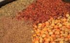 Marché : Les prix des céréales sont restés stables à l'exception du maïs importé