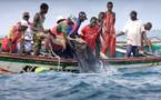 Sénégal : Hausse de l'activité du secteur primaire en juin 2020