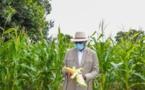 Sénégal : Macky Sall veut la mécanisation soutenue de l'agriculture
