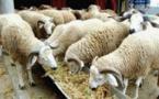 Agro-industrie et élevage : Macky Sall appelle à un investissement massif du secteur privé
