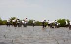 Contre le réchauffement climatique et ses conséquences néfastes sur l'environnement : La Sonatel plante 30 000 propagules à Palmarin et à Joal