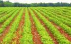 Recherches agricoles : Le CORAF et AKADEMIYA2063 signent un nouvel accord de collaboration