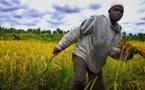 Renforcer la sécurité alimentaire en Afrique (FAO)