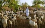 Contribution de l'élevage au Pib du Sénégal : Le secteur pèse « plus de 4% »