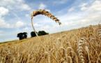 Mbacké : les nouvelles variétés de semences appréciées par les paysans