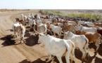 Sénégal : Baisse de l'activité du secteur primaire en août 2021