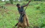 Développement rural : un spécialiste préconise le système des exploitations agricole