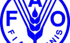 PSE: la FAO adapte son cadre de programmation au Sénégal