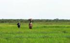 La Corée dote le Sénégal d'un centre de recherche de technologie agricole