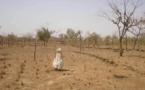 Changement climatique dans l'Est du Sénégal : L'agriculture et l'élevage, principales victimes