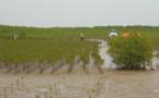 Un officiel préconise une réflexion sur la disparition de la mangrove