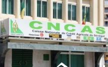 Banques :  La Cncas obtient la certification Pci-Dss