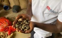 Sénégal : La BNDE s'engage pour le développement de la filière Anacarde
